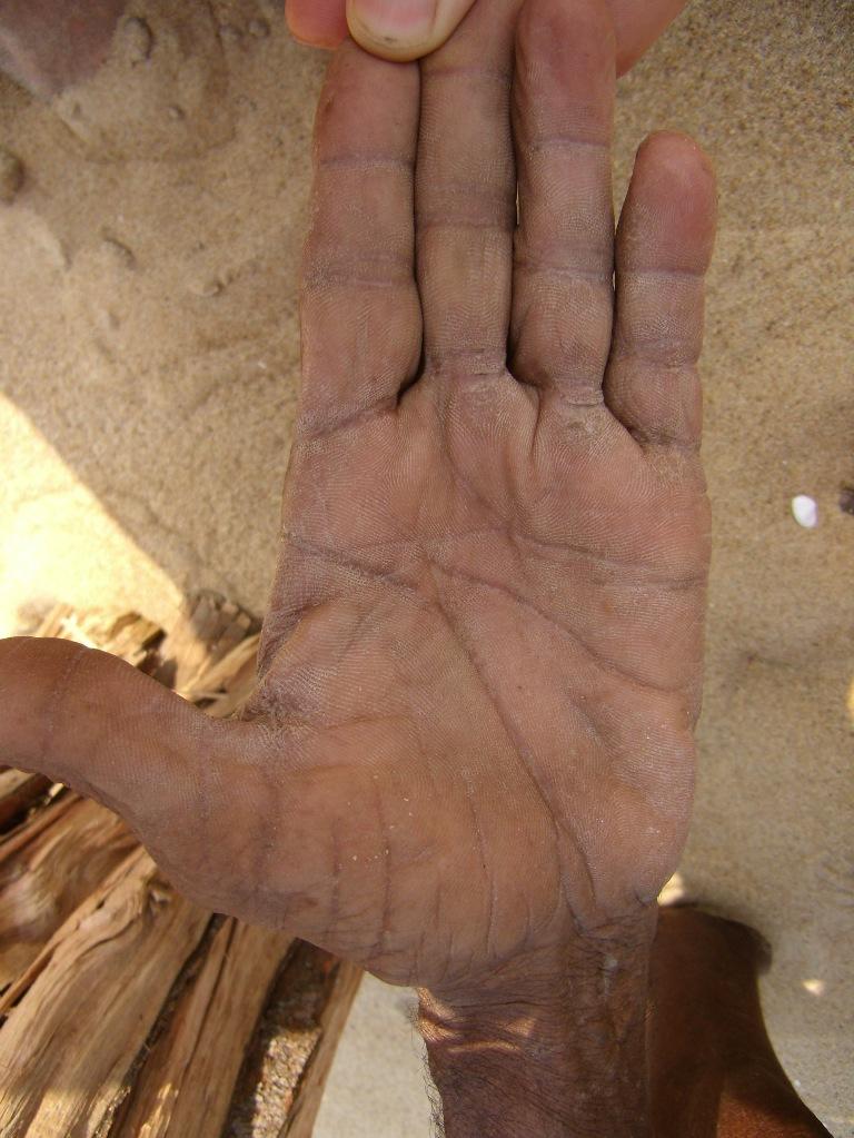 рассада капусты савойской фото